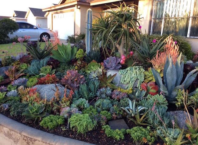 Backyard Cactus Garden 36 cactus garden design ideas : landscaping with cactus and rocks