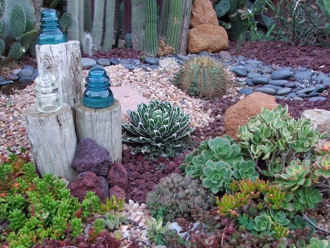 Backyard Landscaping Of Cacti And Succulents.