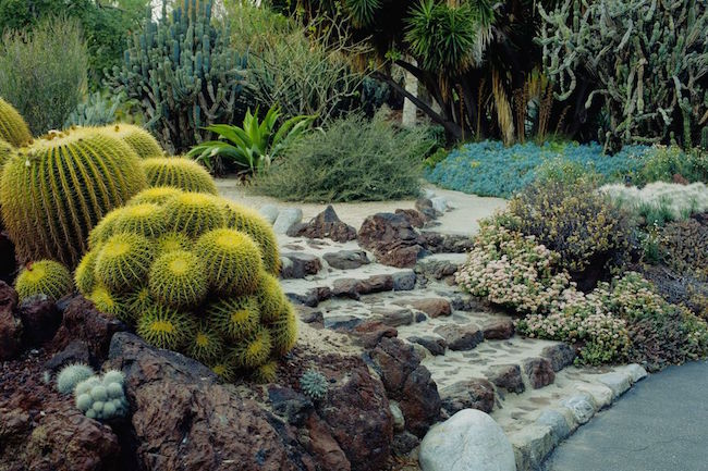 Beautiful Beautiful Cactus Garden With Hardscape.