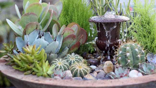 Mini Cactus Garden With Fountain Homeoholic