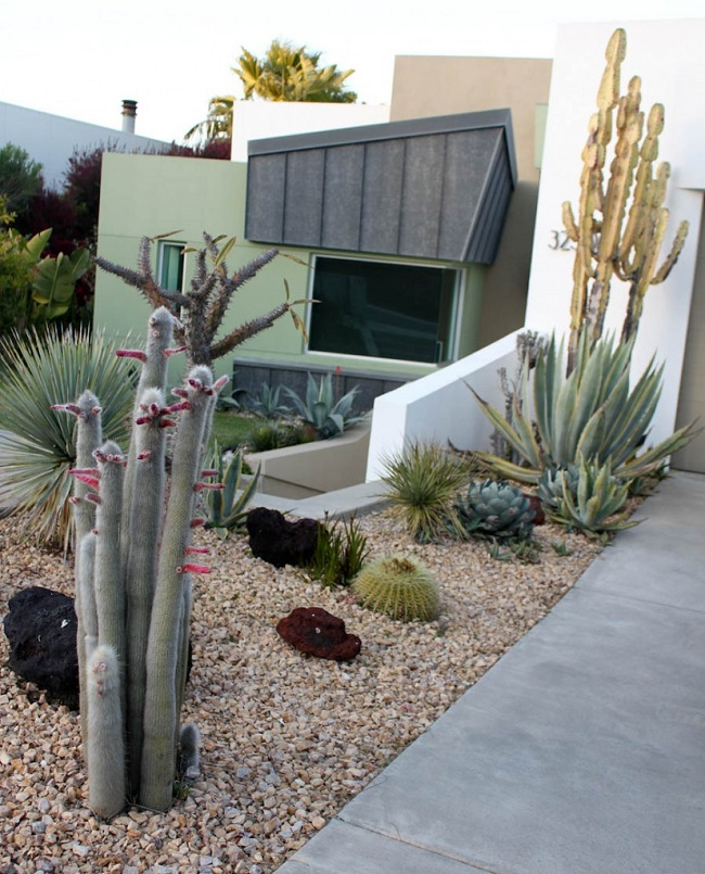Modern Landscape: 36 Cactus Garden Design Ideas : Landscaping With Cactus