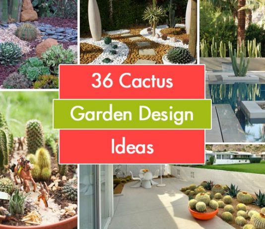 36 Cactus Garden Design Ideas