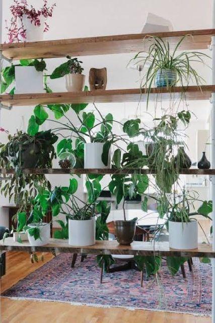 Plants Room Divider
